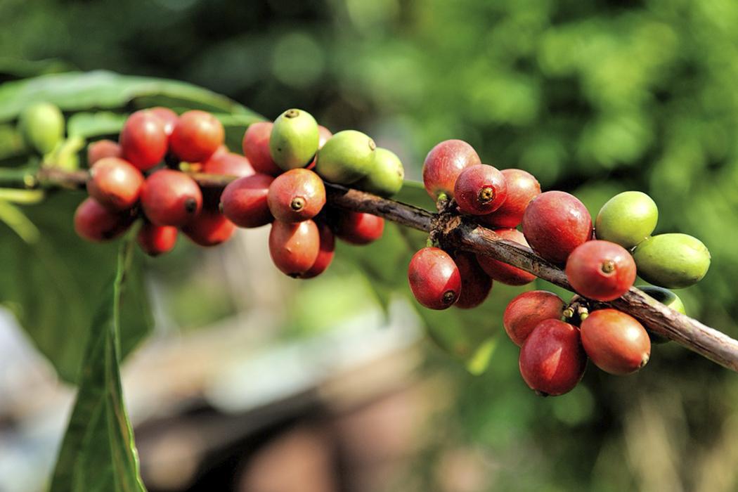 Польза и вред кофе для здоровья человека