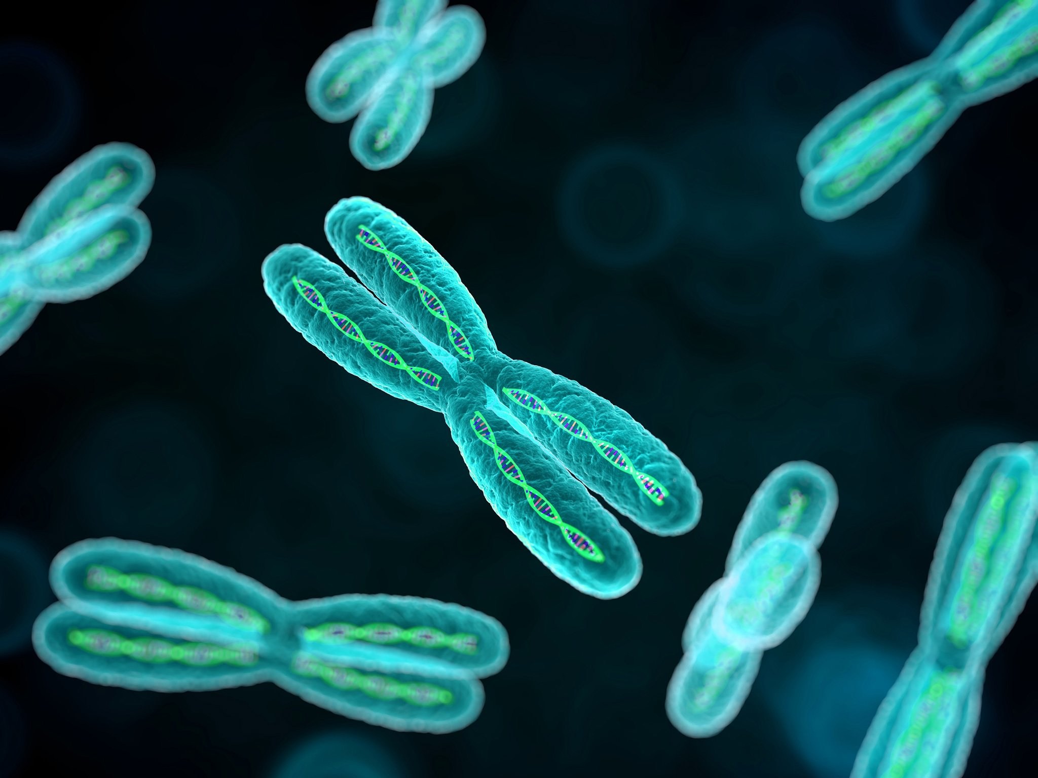 хромосомы у человека картинки